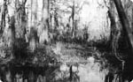 visit - Honey Island Swamp Monster gallery