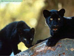 visit - Black Panther Gallery gallery
