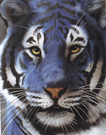 visit - Blue Tiger gallery